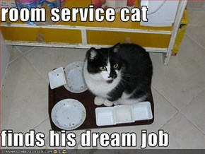 room service cat  finds his dream job