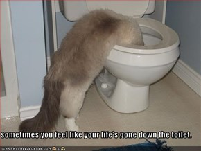 sometimes you feel like your life's gone down the toilet.