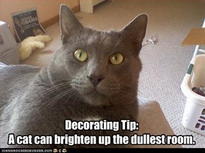 Decorating Tip: A cat can brighten up the dullest room.