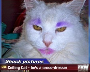 Shock pictures - Ceiling Cat - he's a cross-dresser
