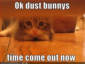 Ok dust bunnys   time come out now