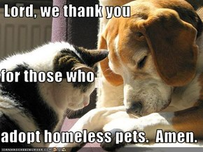 Lord, we thank you for those who  adopt homeless pets.  Amen.