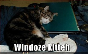 Windoze kitteh