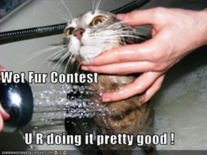 Wet Fur Contest U R doing it pretty good !