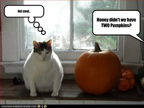Honey didn't we have TWO Pumpkins?