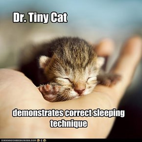Dr. Tiny Cat