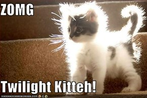 ZOMG  Twilight Kitteh!