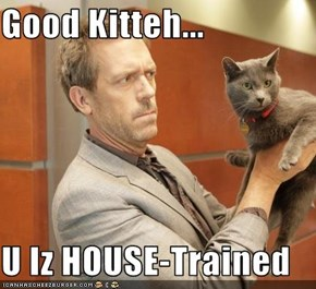 Good Kitteh...  U Iz HOUSE-Trained