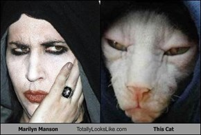 Marilyn Manson Totally Looks Like This Cat