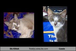 Dis Kitteh Totally Looks Like Cassie