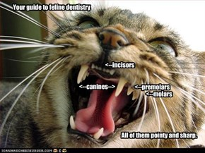 Your guide to feline dentistry