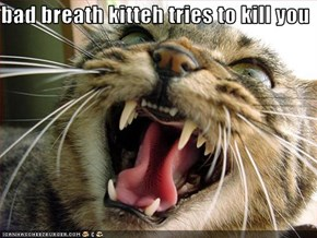 bad breath kitteh tries to kill you