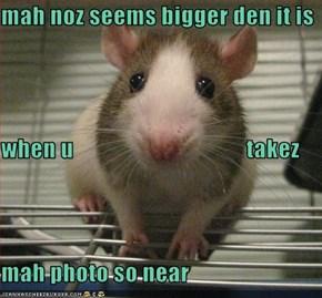 mah noz seems bigger den it is when u                                     takez  mah photo so near
