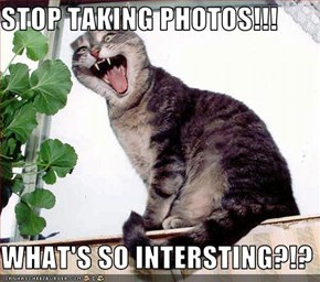 STOP TAKING PHOTOS!!!  WHAT'S SO INTERSTING?!?