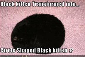 Black kitten Transformed into...  Circle Shaped Black kitten :P