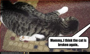 Mommy..I think the cat is  broken again..