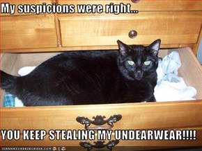 My suspicions were right...  YOU KEEP STEALING MY UNDEARWEAR!!!!