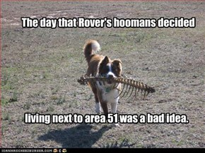 The day that Rover's hoomans decided