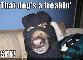 That dog's a freakin'  SPY!