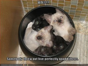 WTF???  Somebody threw out five perfectly good kittens.