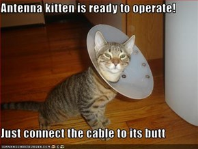 Antenna kitten is ready to operate!  Just connect the cable to its butt