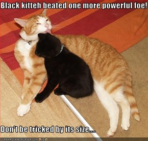 Black kitteh beated one more powerful foe!  Don't be tricked by its size....