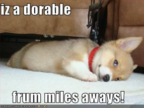 iz a dorable  frum miles aways!