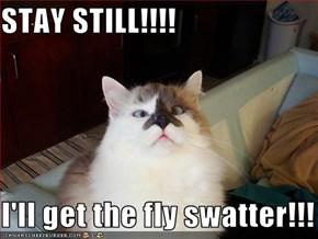 STAY STILL!!!!  I'll get the fly swatter!!!