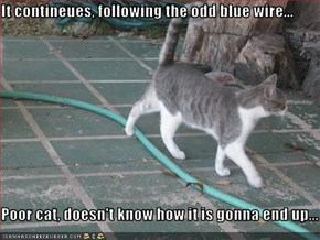It contineues, following the odd blue wire...  Poor cat, doesn't know how it is gonna end up...