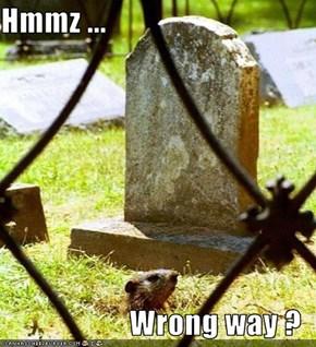 Hmmz ...  Wrong way ?