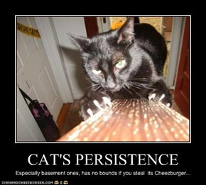 CAT'S PERSISTENCE