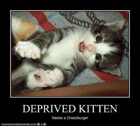 DEPRIVED KITTEN
