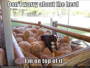 Don't worry about the herd  I'm on top of it