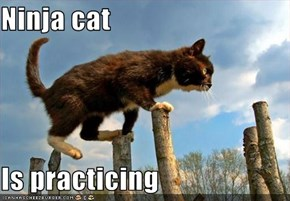 Ninja cat  Is practicing