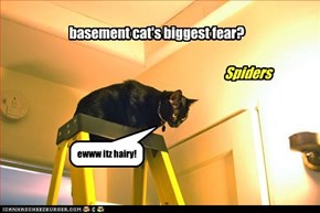 basement cat's biggest fear?