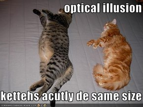 optical illusion  kettehs acutly de same size