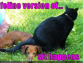 feline version of...  sit happens