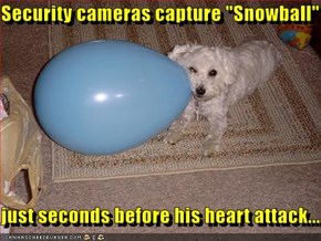 "Security cameras capture ""Snowball""  just seconds before his heart attack..."
