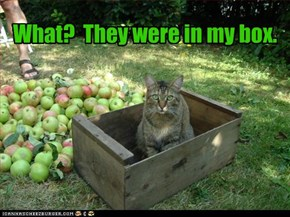 What?  They were in my box.