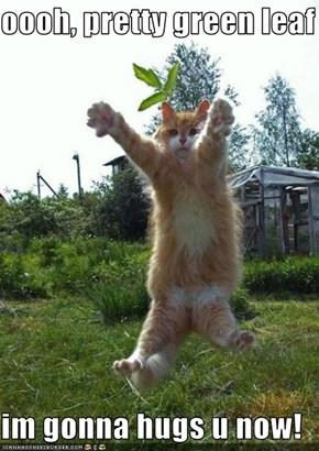 oooh, pretty green leaf  im gonna hugs u now!