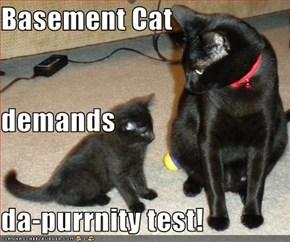 Basement Cat demands da-purrnity test!