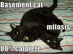 Basement cat mitosis 80% catplete