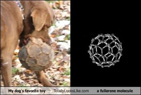 My dog's favorite toy Totally Looks Like a fullerene molecule