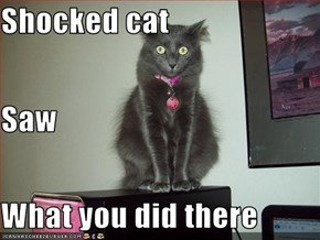 Shocked cat Saw  What you did there