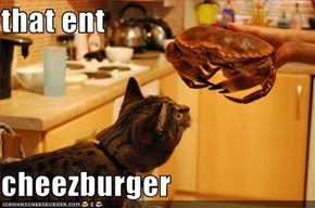 that ent  cheezburger