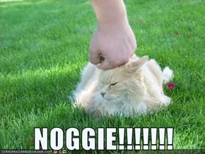NOGGIE!!!!!!!