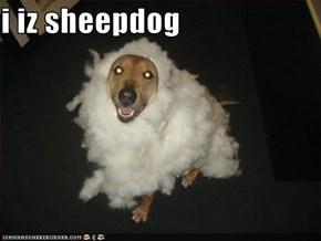 i iz sheepdog