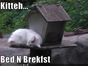 Kitteh...  Bed N Brekfst
