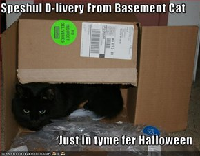 Speshul D-livery From Basement Cat  Just in tyme fer Halloween