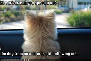 Hey driver, can you speed it up?  the dog from next door is still following me...